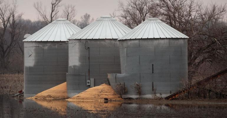 Flooded out grain