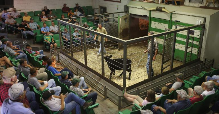 Midwest cattle auction