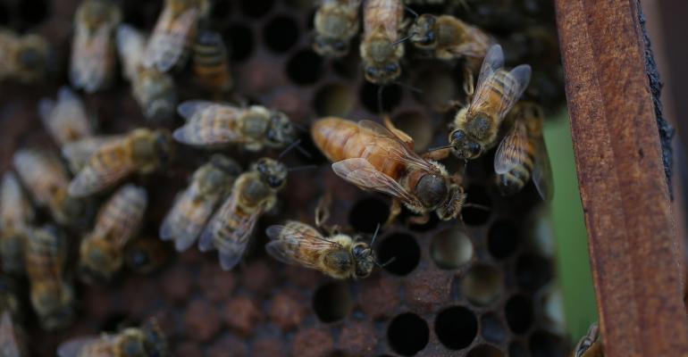 Bee habitat