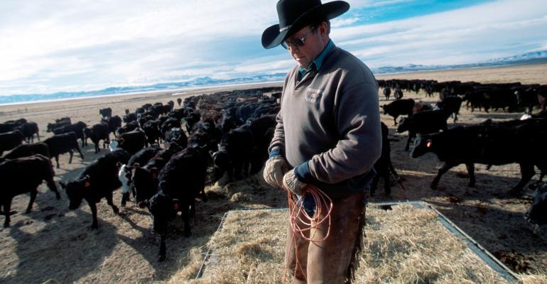Cow-calf producer