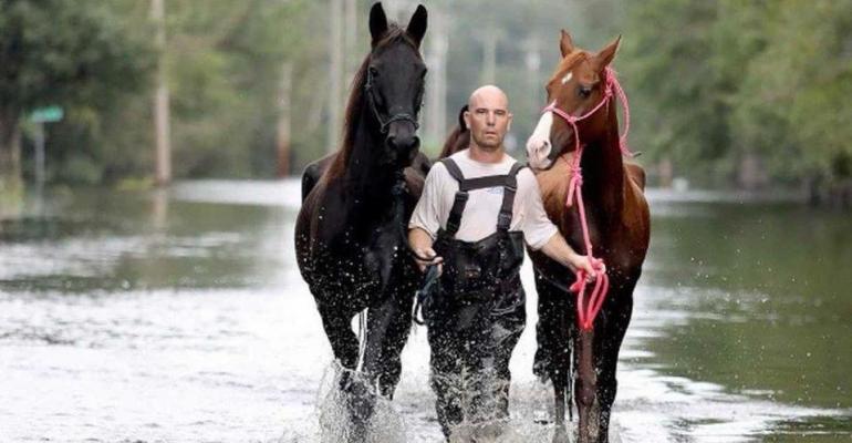 Hurricane Cowboy