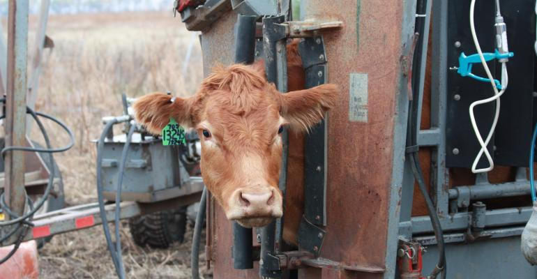 Antibiotics in Livestock