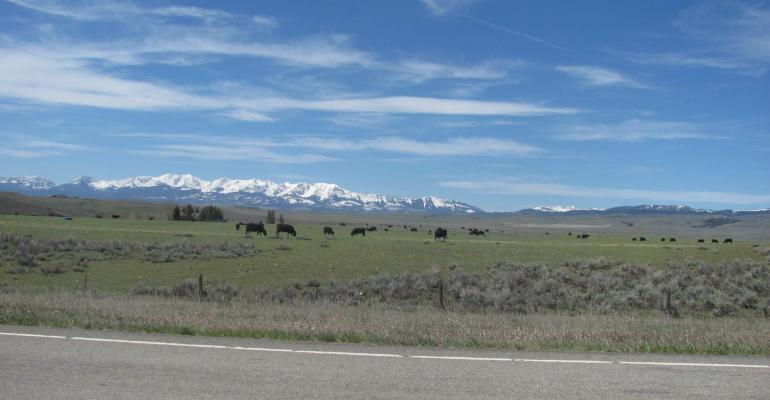 Montana Angus