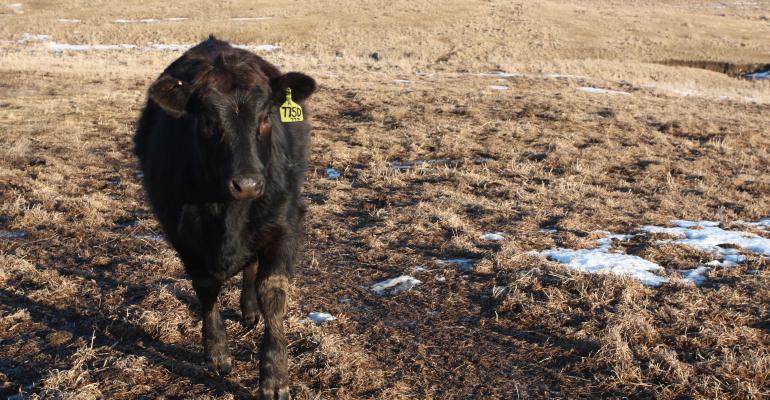 Antibiotics in animal agriculture