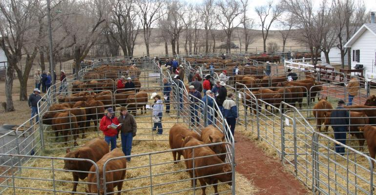 Cattlemen at a bull sale