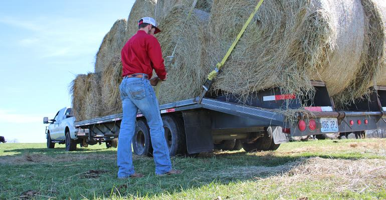 farmer strapping round hay bales on trailer
