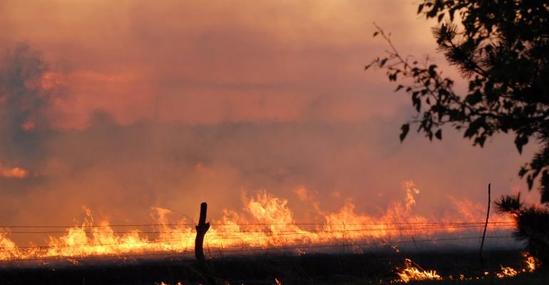 pasture prescribed burn