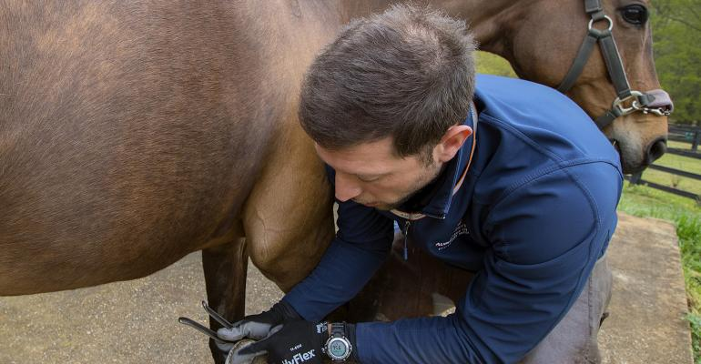 Dr. Enrico Tegazzin, an Auburn University veterinary and podiatry intern on Dr. Debra Taylor's team, trims hooves as part of the treatment program for equine laminitis.
