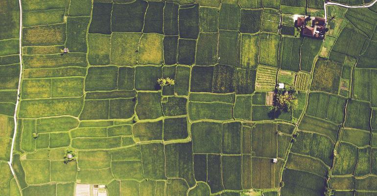 Aerial view of green farmland