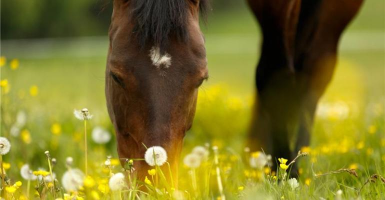 horse with dandilions