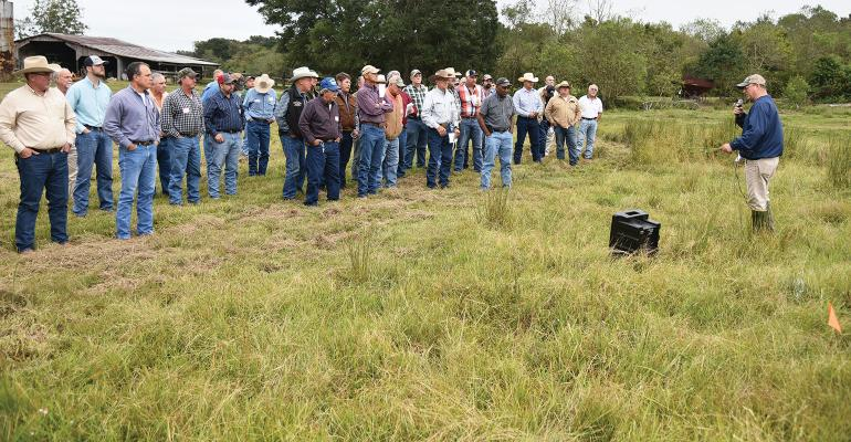 LSU AgCenter weed specialist Ron Strahan tells cattle producers which products can be used to control bulrush weeds.