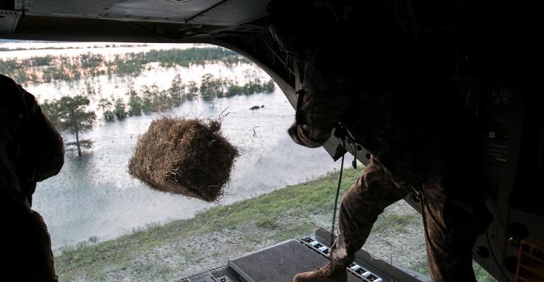 Dropping  Hay.