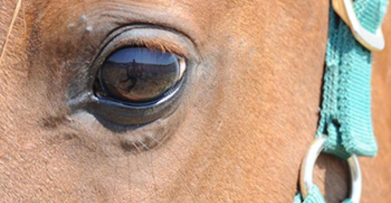 A well-hydrated horse has a bright eyes surrounded by healthy tissues.