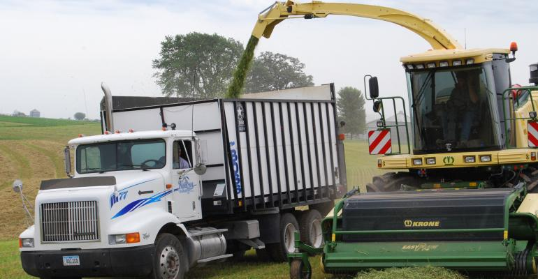 corn silage being harvested