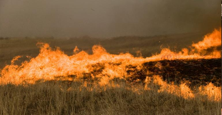 wildfire_pasture_todd