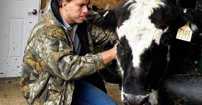 checking cow blood for cortisol