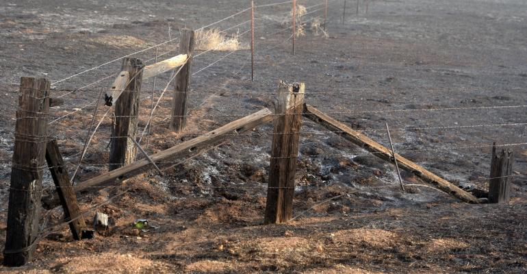 burned fences
