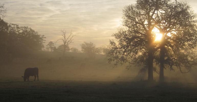 Morning Serenity by Laura Molitor