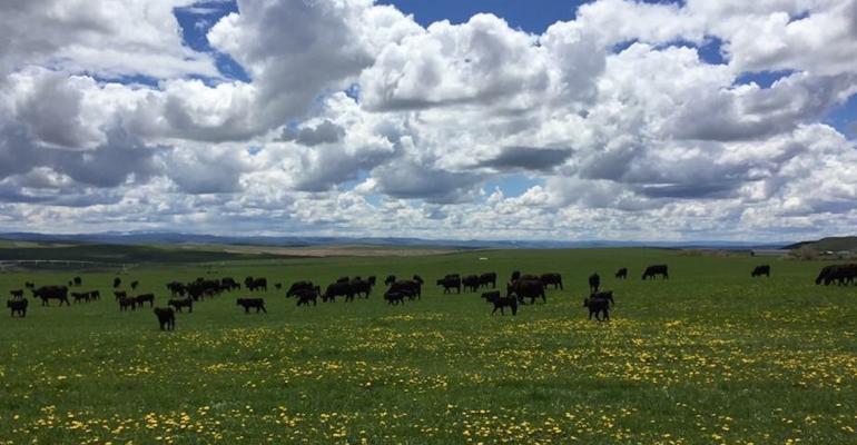 Springtime in Colorado