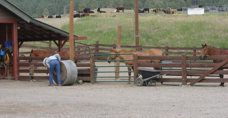 Horses are essential on the ranch