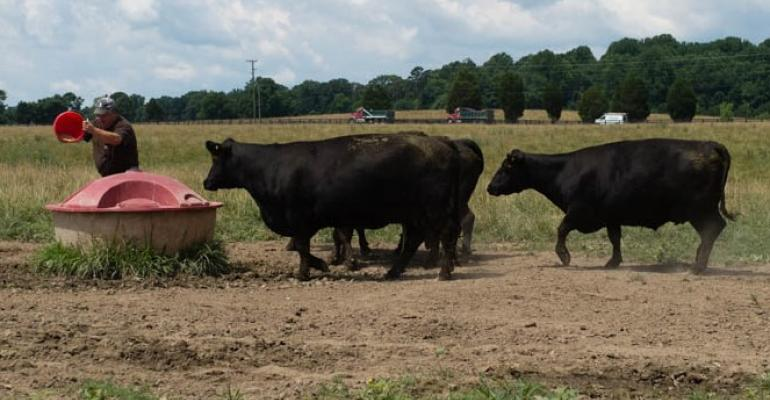 Purina Cows Liquid Feeder Summer Fescue Pasture