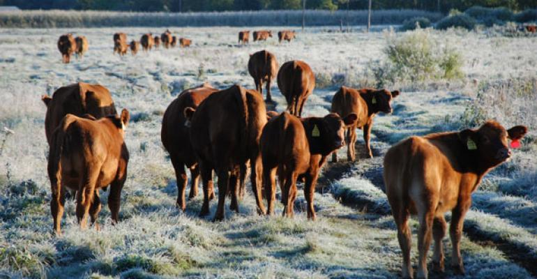 Grazing too short in fall and winter can mean more weeds in the spring