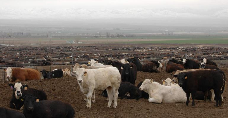 Fed cattle prices remain strong