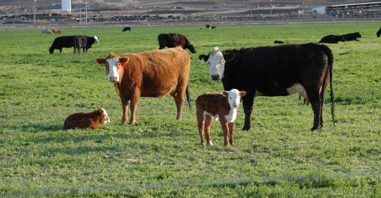 Cow-calf pairs