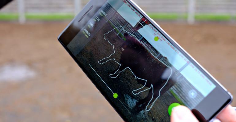Smartphone app weighs cattle