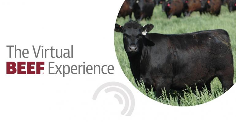 The Virtual BEEF Experience.jpg