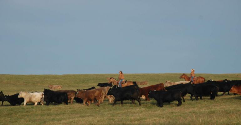 Cattle inventory bigger in 2017