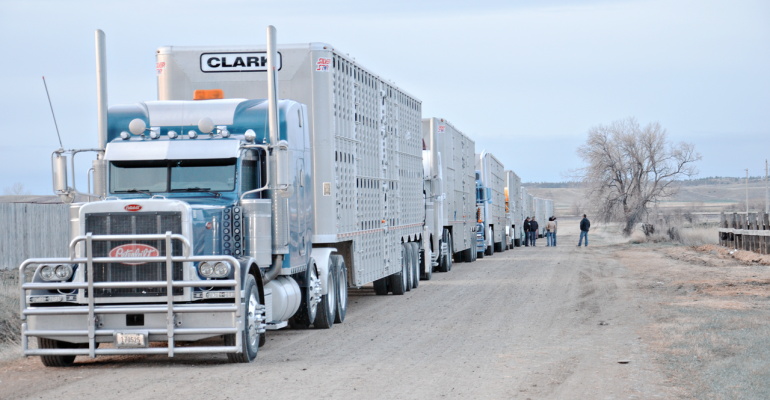 Cattle truckers ready to roll