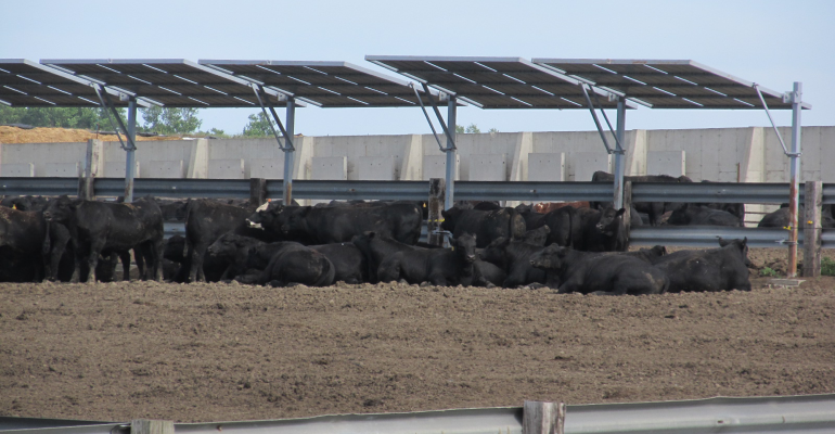 Outdoor cattle shade