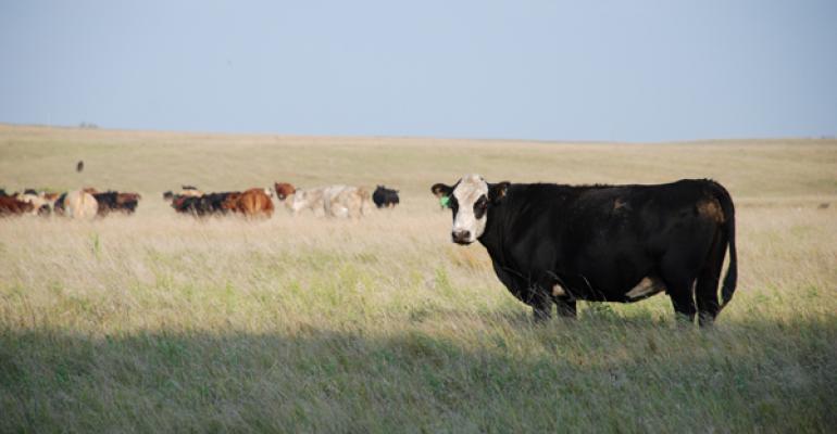 Black Baldy cow on pasture
