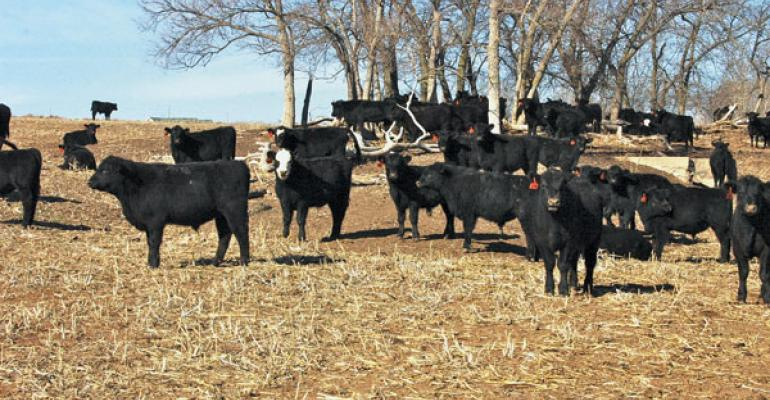 stocker cattle prices require risk management