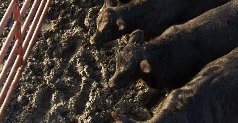 Extreme weather, wet or dry, increases blackleg disease risk
