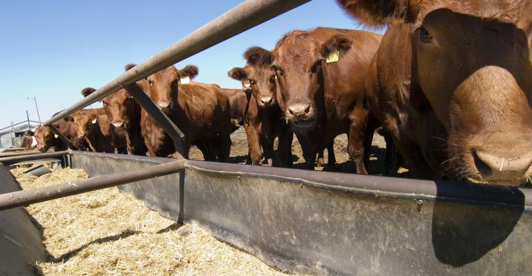 cattle feedlot feed bunk-shutterstock_918722.jpg