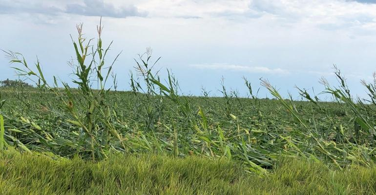 central-iowa-crop-damage-derecho.jpg