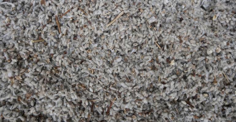 cottonseed-feed-478770216.jpg