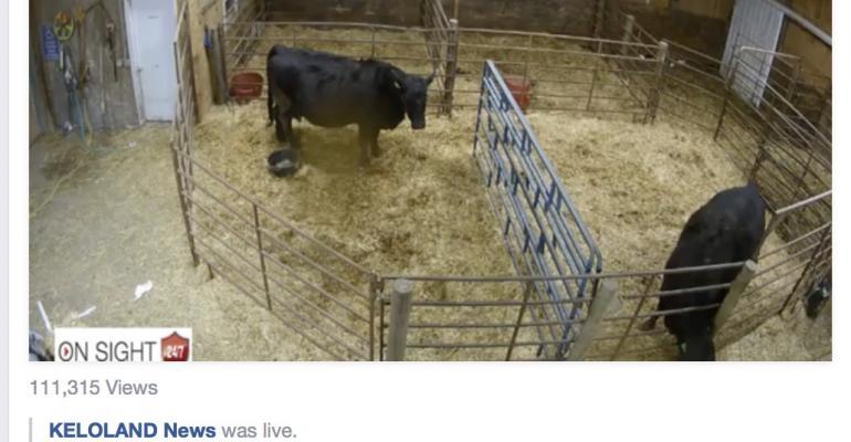 KELOLand Cow Cam