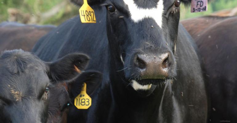 Cow calf management