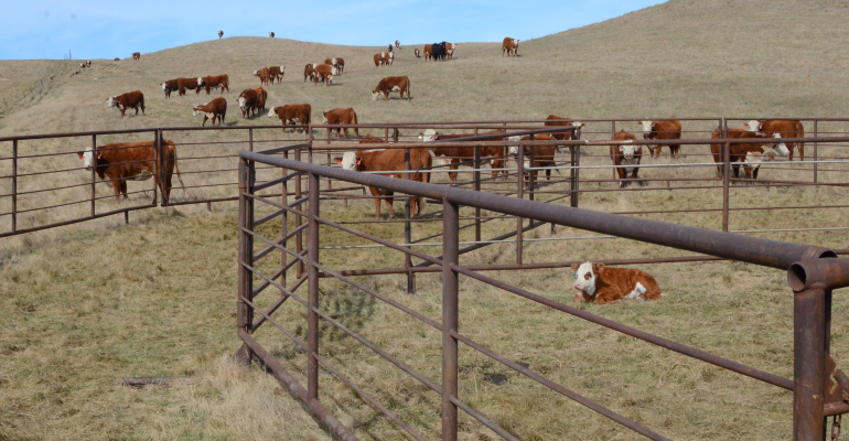 Don't let your cows slip between now and breeding season