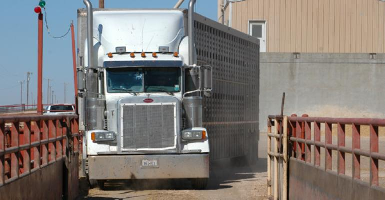 Feedyards moving cattle at aggressive pace