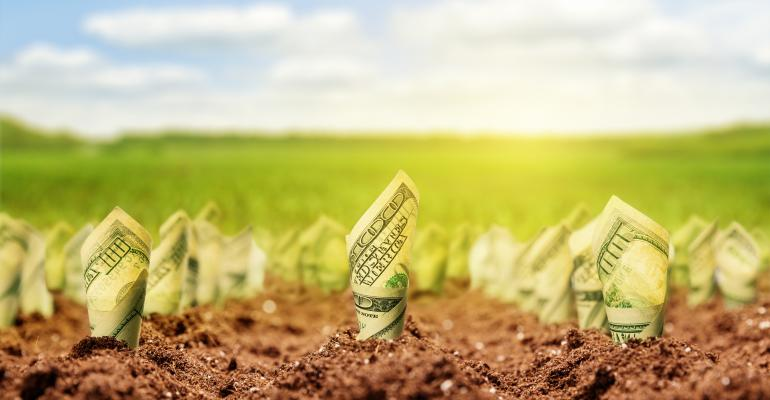 dollar bills growing from ground concept