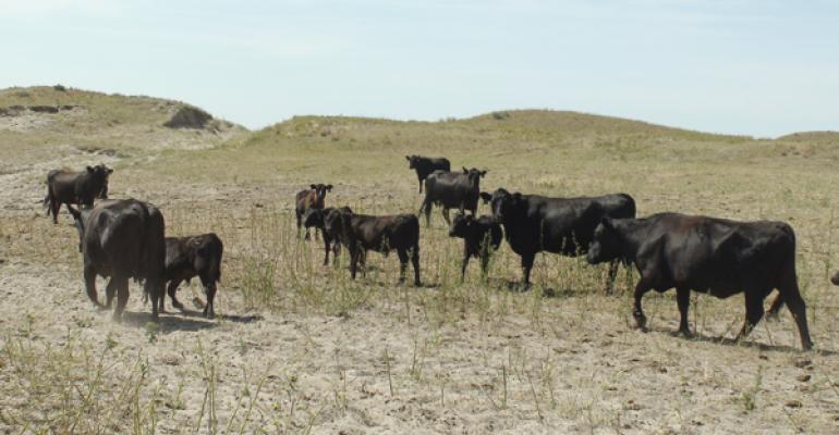 Drought pasture