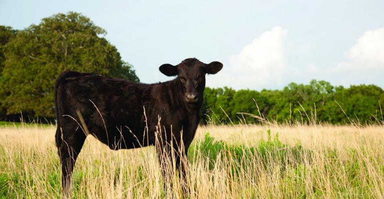How to use mortality data to improve cattle health protocols