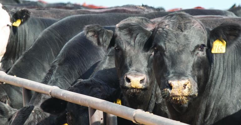 Are we prepared to feed beef to 9 billion?