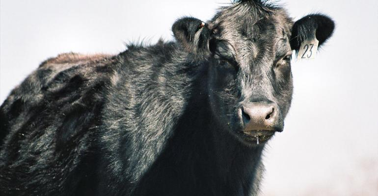 Iowa Beef Checkoff referendum passes