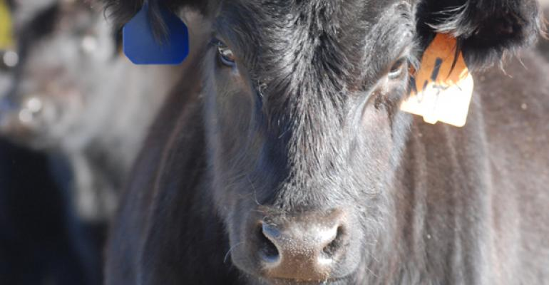 5 Trending Headlines: What's up with the cattle market tailspin? PLUS: Ag education on the rise in Nebraska