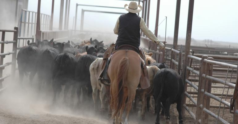 Feedlot Tour | Dean Cluck Feedyard